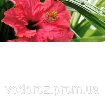 5591223e5 Купить Декор Cerrol IMPERIA HIBISKUS 1 CENTRO 20x50 508603 в Киеве ...