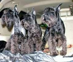 Продажа собак, щенков