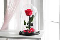 """Вечная роза в колбе """"Премиум"""""""