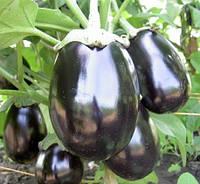 Семена баклажанов чёрный красавец , Польша