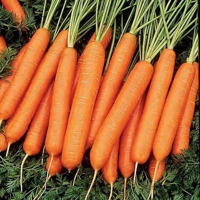 Семена моркови нантская