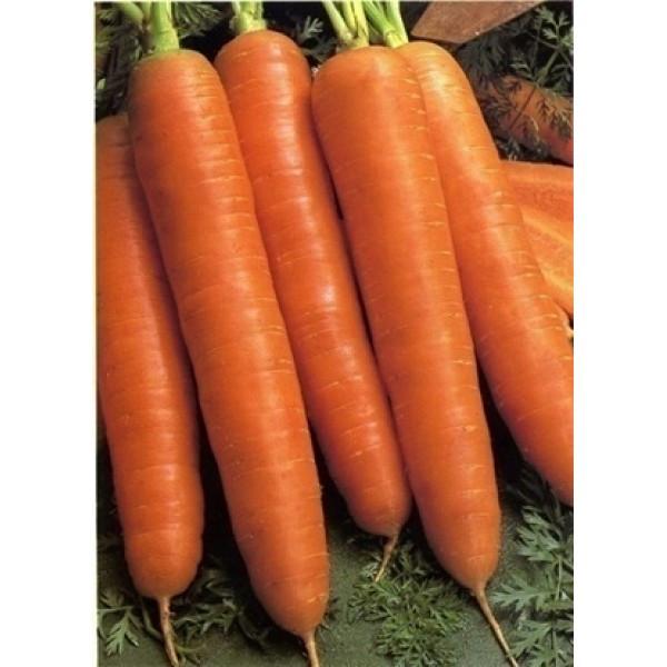 Семена моркови красный великан