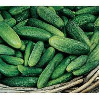 Семена огурцов Парижский Карнишон 1 кг , Польша
