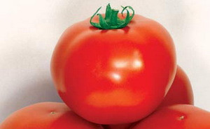 Семена томатов Дар Заволжья  1 кг , Польша