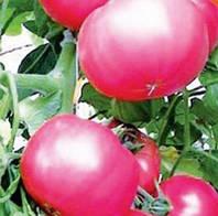 Семена томатов Волгоградский Розовый 1 кг , Польша