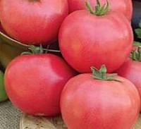 Семена томатов Ляна Розовая 1 кг, Польша
