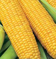 Семена кукурузы сахарная Деликатесная 1 кг , Украина