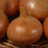 Семена лука Глобус 1 кг , Украина