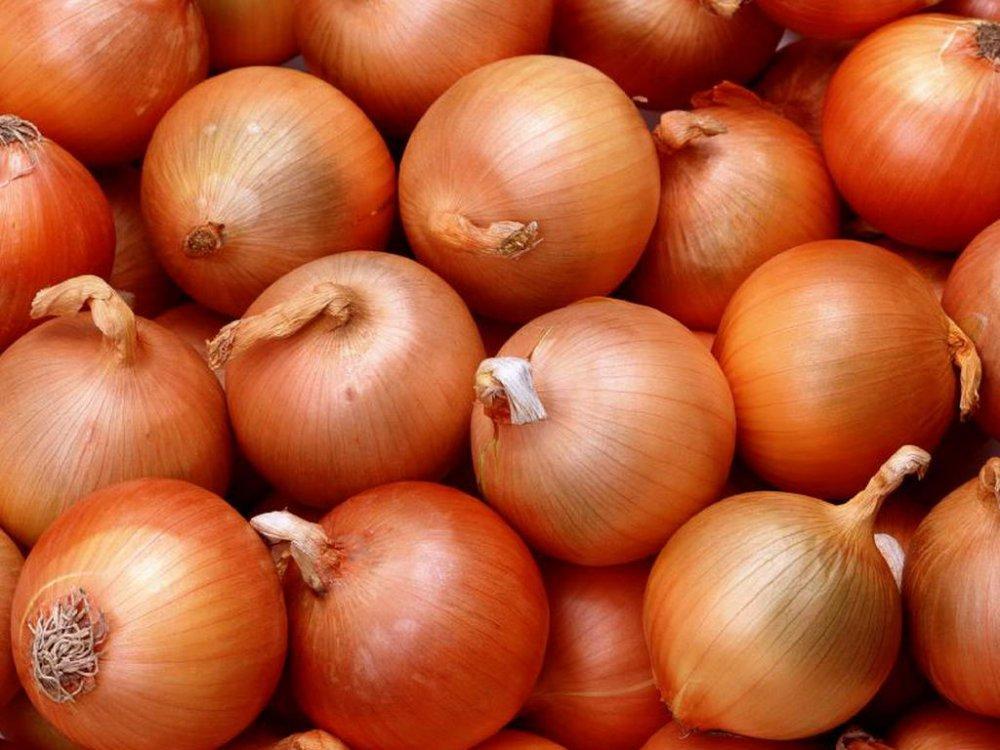 Семена лука халцедон 1 кг , Украина