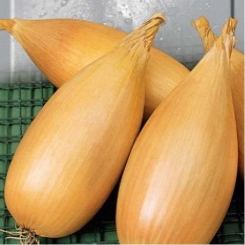 Семена лука Любчик 1 кг , Польша
