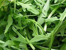 Семена салата руккола 1 кг . Польша