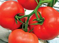Семена томатов Мобил