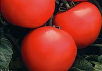 Семена томатов Дебют F1 1 кг , Польша