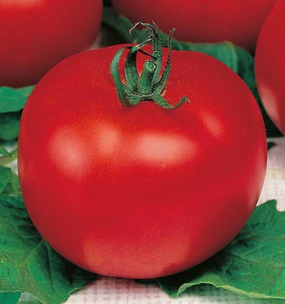 Семена томатов Виза 1 кг , Польша