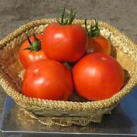 Семена томатов Багира F1