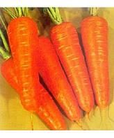 Семена моркови Шантанэ Курода 1 кг , Украина