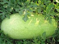 Семена арбуза Чарльстон Грей 1 кг , Польша