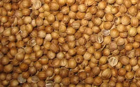Семена  Кориандра 1 кг , Украина