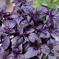 Семена базилика фиолетовый Дар Копал 1 кг , Польша