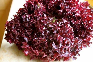 Семена салата Лолла Роса 1 кг , Польша