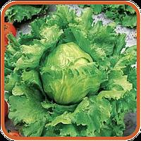 Семена салата майская королева 1 кг  .Польша