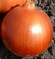 Семена лука Эталон Голд 1 кг, Молдова