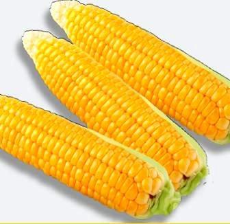 Семена сахарной кукурузы Бостон F1 1 кг , Украина