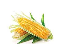 Семена кукурузы сахарной Багратион F1 1 кг , Украина