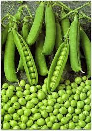 Семена горохо овощного Джоф 1 кг , Украина
