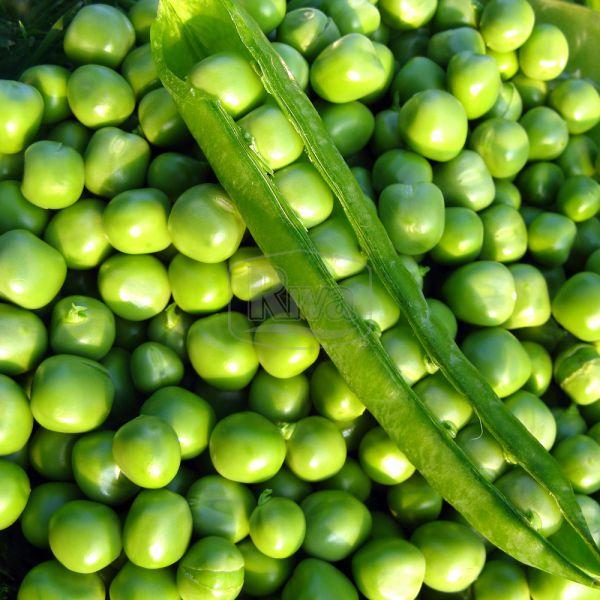 Семена гороха овощного Адагумский 1 кг , Украина
