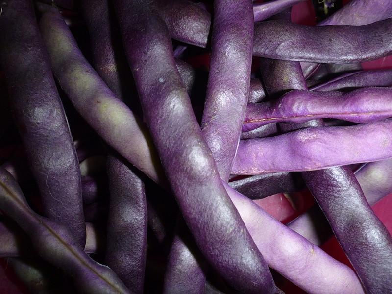 Семена спаржевой фасоли Блаухильда 1 кг , Польша