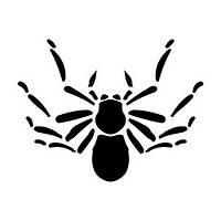 Виниловая наклейка на авто - паук 14