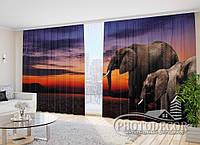 """Фото Шторы в зал """"Слоны"""" 2,7м*4,0м (2 половинки по 2,0м), тесьма"""