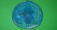 Молд лист цимбидиума