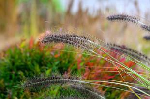 Декоративные травы осенью