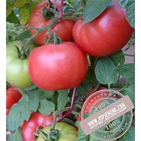 Enza Zaden Димероза F1 (Dimiroza F1) семена розового томата индетерминантного для пленочных теплиц Enza Zaden, оригинальная упаковка (500 семян) АКЦИЯ