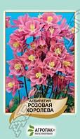 Семена Аквилегия (водосбор) гибридная Розовая Королева 0,2 грамма Агропак