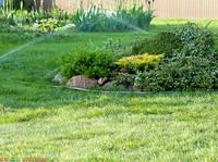 Озеленение приусадебной территории – создаем газон