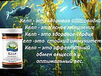 Келп, бурая водоросль - Поддержка щитовидной железы.