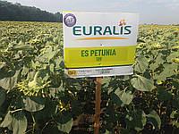 Подсолнечник ЕС ПЕТУНИЯ, Евралис Семанс. Устойчив к шести расам заразихи А-F. Масличный