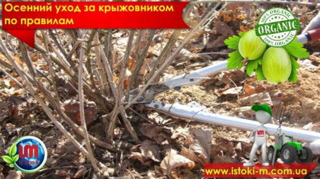 удобрение органическое для подкормки крыжовника_вермигрунт для посадки крыжовника_почвосмесь для крыжовника_удобрение органическое_купить органическое удобрение_производство органических удобрений_купить биогумус_купить вермигрунт для рассады_купить вермигрунт универсальный_купить вермигумат_купить органическое удобрение оптом_удобрение органическое для овощных культур_удобрение органическое для плодовых кустарников_удобрение органическое для фруктовых деревьев_удобрение органическое для подкормки овощей_удобрение органическое для подкормки ягод_удобрение органическое для подкормки фруктовых деревьев_органическое земледелие