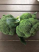 Вирощуємо броколі - що варто вибрати?