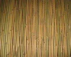 Забор из тонкинского бамбука 1000х3000мм диаметр10-13мм