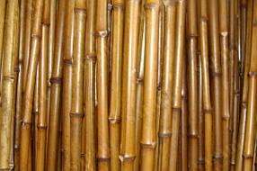 Бамбуковый ствол для сада и огорода длина 2м диаметр до 3 см