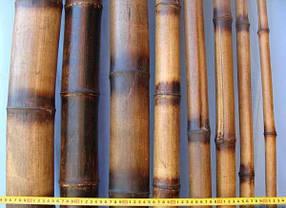 Бамбуковый  ствол-декоративный (диаметр  12-14см , длина 3м.)