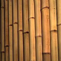 Ствол бамбука-К  2.5-3см  длина 4м