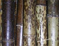 Ствол бамбука-К (леопардовый) 6-7см  длина 4м