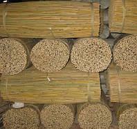 Тонкинский  бамбуковый ствол24-26мм длина 3м