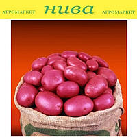 Крістіна насіннєва картопля овальна рання 2 репродукція ipm potato group (5 кг 25 кг)