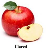 Айдаред, Idared саджанці яблуні на підщепі ММ 106